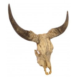Decorative Buffalo Skull