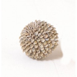A decorative shell ball made with small conch type shells